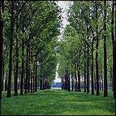 Είδη δέντρων
