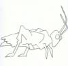 Ακρίδα