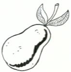 Αχλάδι