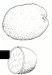 Γκρέιπφρουτ