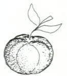 Μανταρίνι
