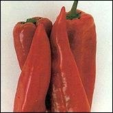 Πιπεριά κόκκινη