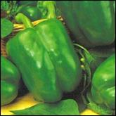 Πιπεριά πράσινη