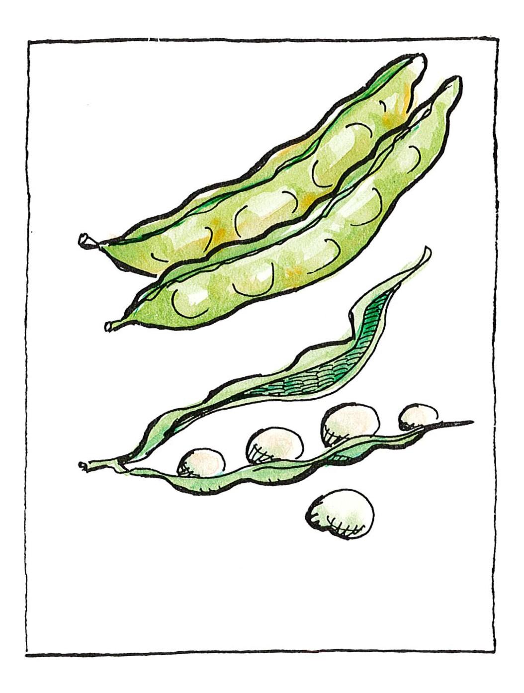 Φασολάκια
