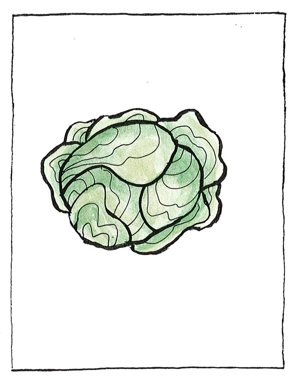 Λάχανο
