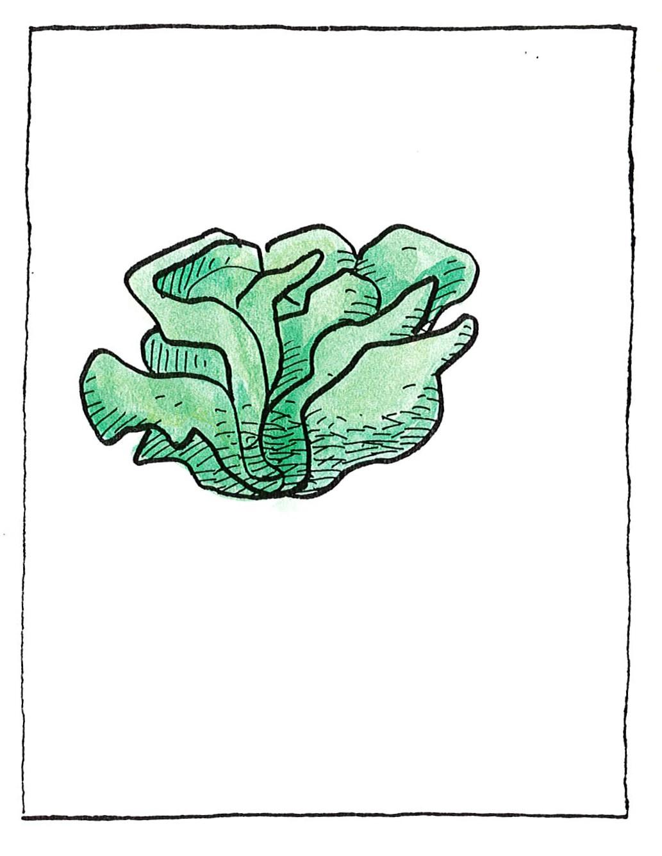 Μαρούλι