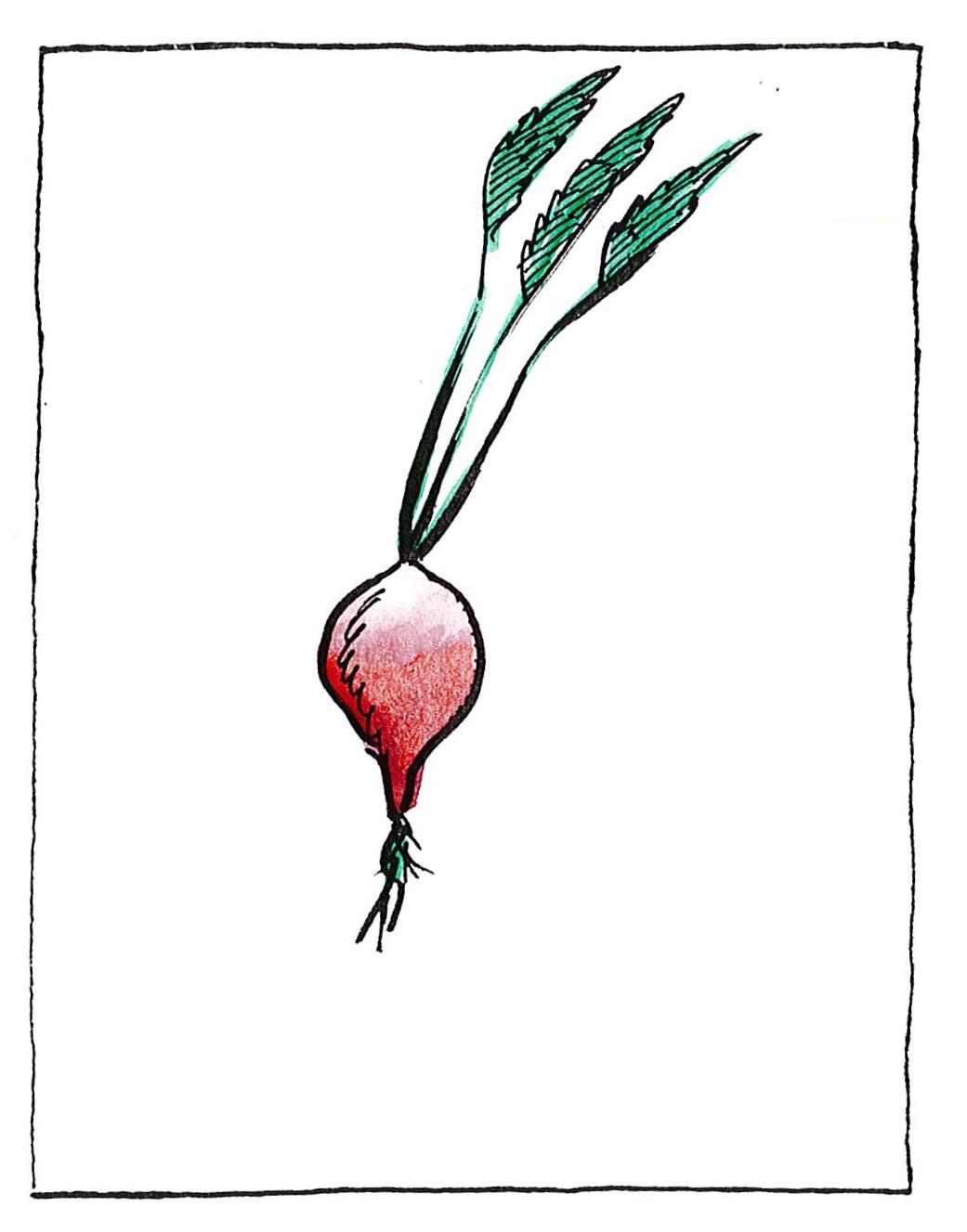 Ραπανάκι