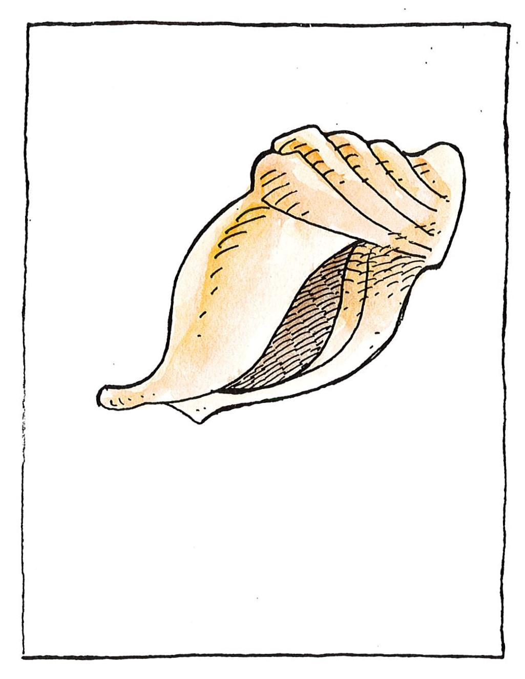 Κοχύλι